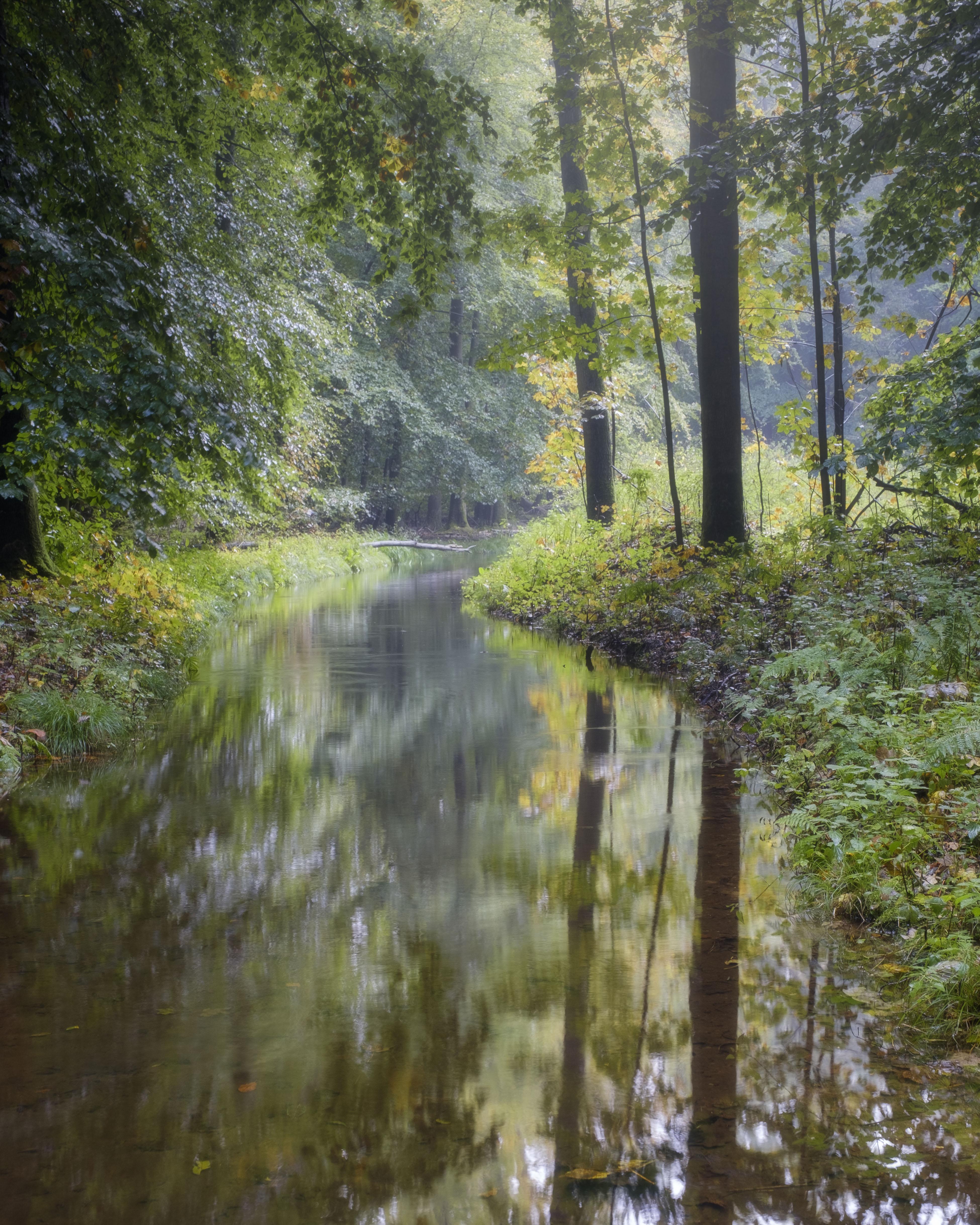 Spiegeling van bos in helder riviertje